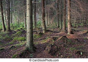 forêt,  Spooky