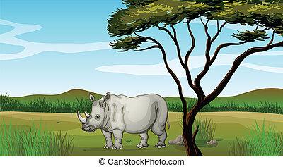 forêt, taureau