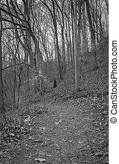 forêt, texture