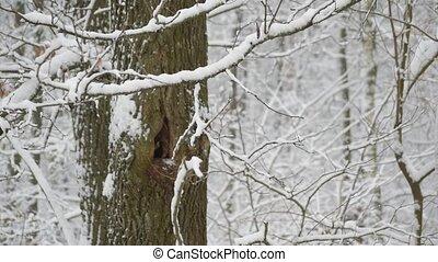 forêt, tomber, arbre, neige, creux