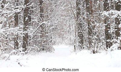 forêt, tomber, hiver, neige