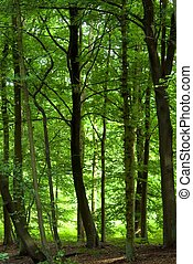 forêt, vert, dense