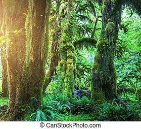 forêt, vert