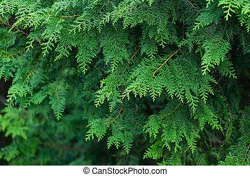 forêt verte, arbres