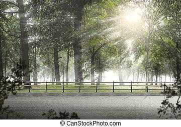 forêt verte, asphaltez route