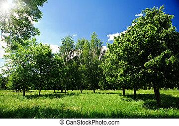 forêt verte, clairière
