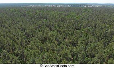 forêt verte, pin, aérien