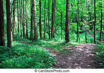forêt verte, route