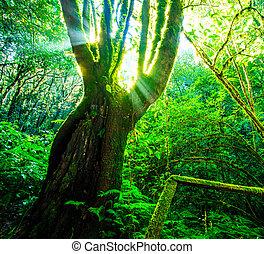 forêt verte, sunlight., nature, grand, arbres