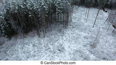 forêt, vue, aérien, hiver, neigeux