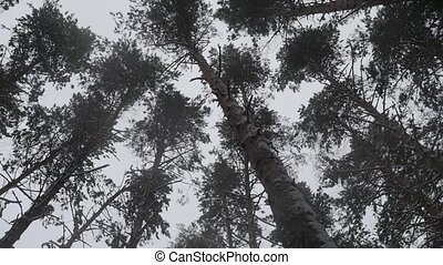 forêt, vue., surgelé, aérien, winter.