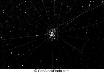 forêt, web., centre, araignés