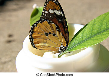For Sensitive Skin - Delicate butterfly in face cream jar