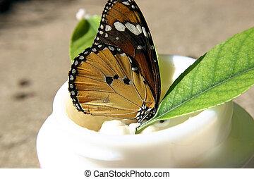 Delicate butterfly in face cream jar