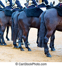 for the queen in london england horse and cavalry