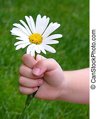 for you.. - hand holding daisy..great for invitations and ...