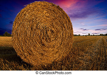 forage packed - round bales of forage at sunset