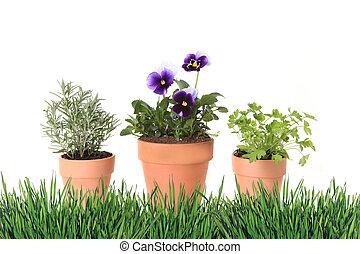 foral, jardinagem, primavera, argila, potes, tempo, erva