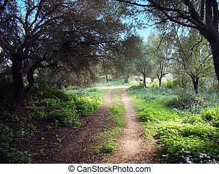 Forbidden Forest - Path in a forbidden forest