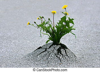 Plants emerging through rock hard asphalt. Illustrates the force of nature and fantastic achievements!