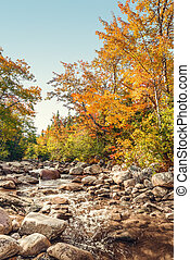 Foreat stream in the fall