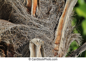 foreground of palm trunk