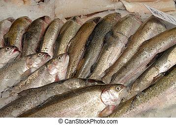 forel, op, fishmongers