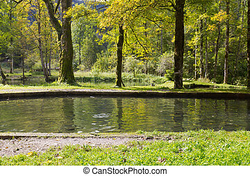 forelle, fische, schwimmender, in, süßwasser, während, herbst, in, deutschland, europa