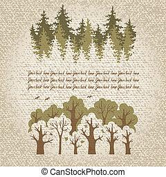 fores, coniferous, decíduo, verde, ilustração