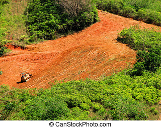 tropical deforestation - fores destruction,tropical...