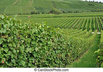 hilly vineyard