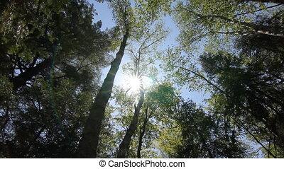 forest., été, ontario