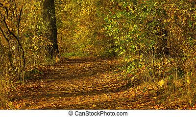 forest., φθινόπωρο , ηλιόλουστος , γραφικός , φύση