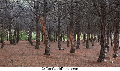 forest., дикий