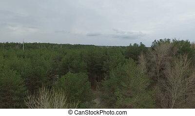 forest., зеленый, антенна, посмотреть