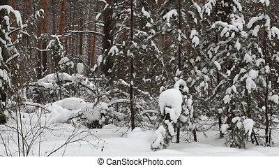 forest., зима, снегопад