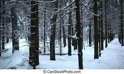 forest., зима