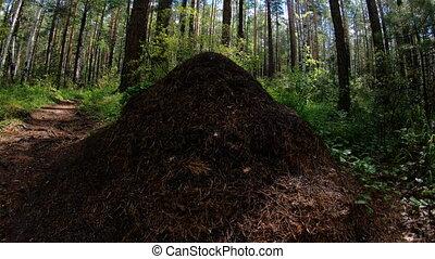 forest., муравейник, кастрюля