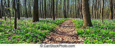 forest., панорама, весна