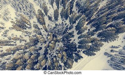 forest., aanzicht, winter, luchtopnames