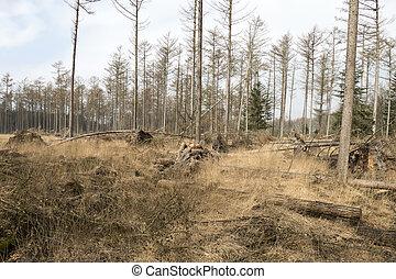forest., abîmer, orage