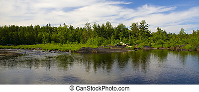 Forest Across River