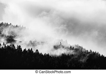 Forest afrer rain. Dark tree and light clouds of vaporizing water