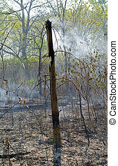 Forest after fire 1