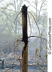 Forest after fire 3