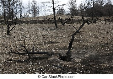 forest after fire disaster burned trees spain
