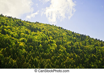 Forest against bright blue sky