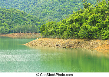 Forest along the lake