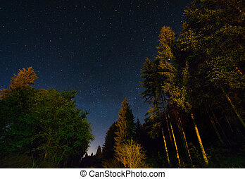 Forest and a night sky full of stars
