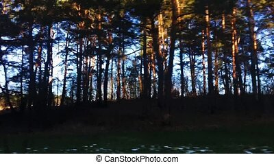 Forest and blue sky, driving by a nature landscape on a sunny day